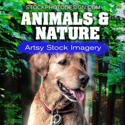 Animals-&-Nature-Stock-Images